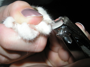 how to cut cat nails pictures