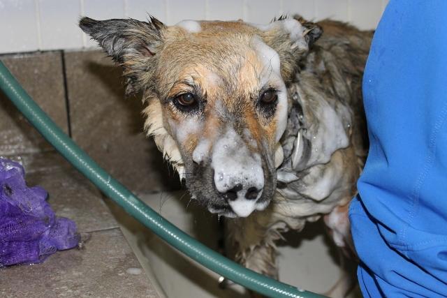 Dog Grooming Sylvan Lake